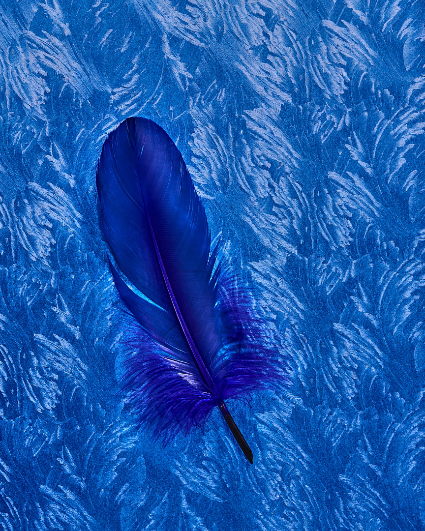 case study blue stilllife studio photography